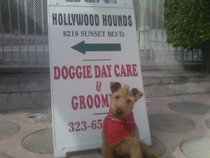 Photo of Mohawk Hollywood Hounds Sign