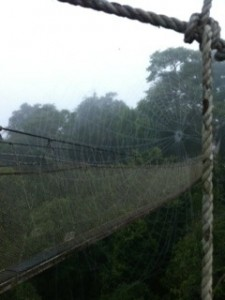 Photo of Spider Web Rainforest Walk Peru