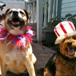 Photo of Happy Dogs Ready for a Fun Memorial Day Weekend