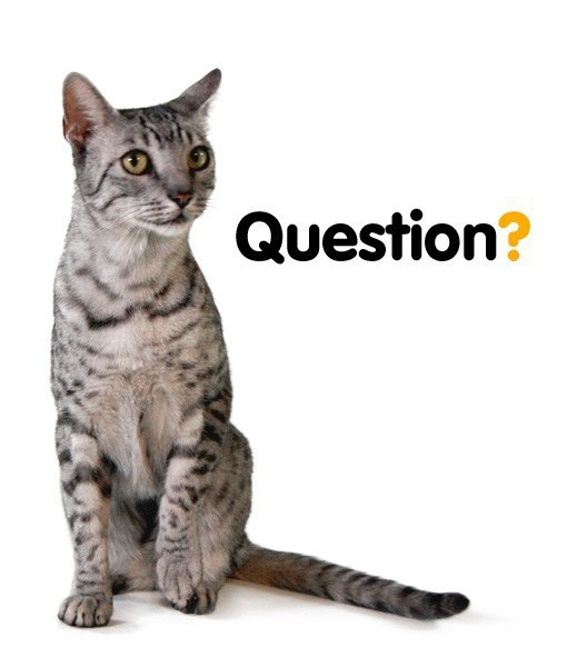 kitty-question-5-1